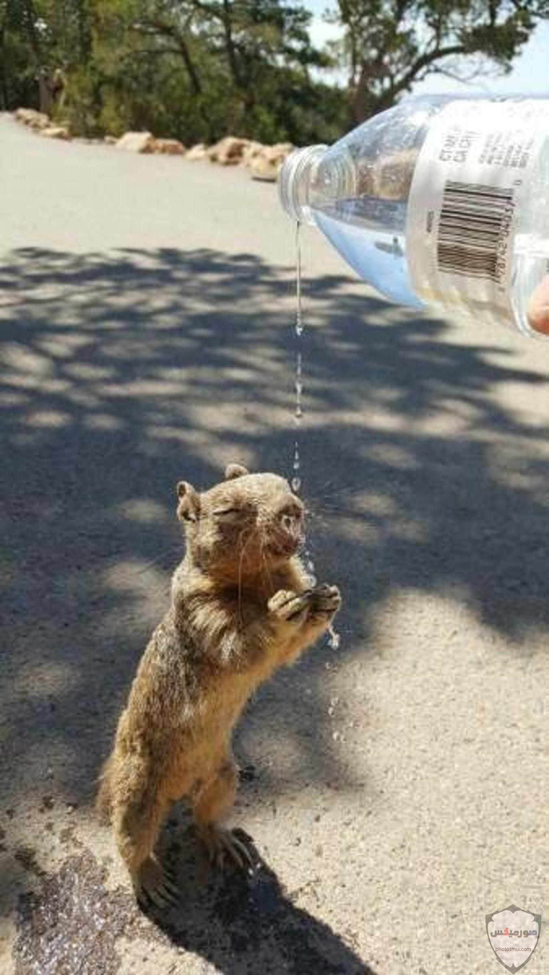 صور حيوانات مضحكة فيديوهات حيوانات مضحكة جدا 2020 29