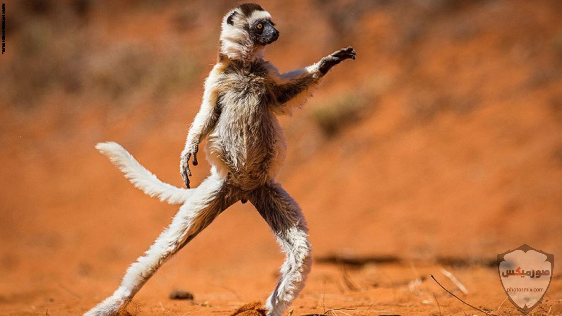 صور حيوانات مضحكة فيديوهات حيوانات مضحكة جدا 2020 33