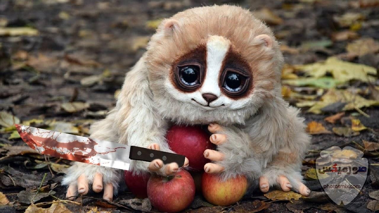 صور حيوانات مضحكة فيديوهات حيوانات مضحكة جدا 2020 47
