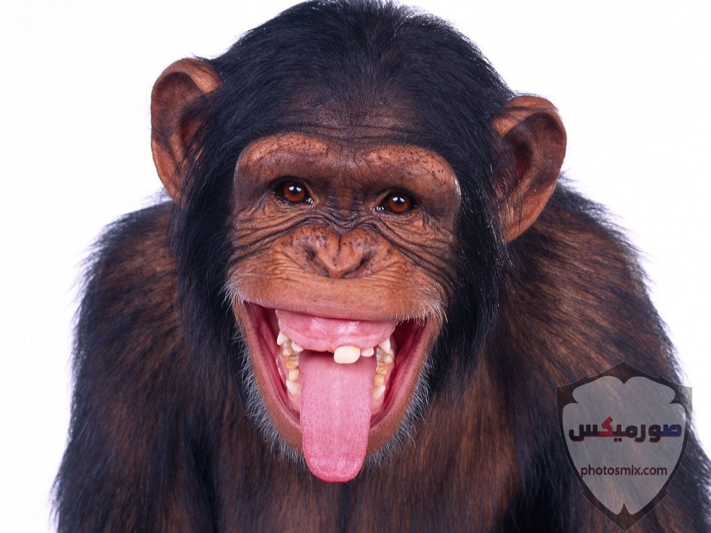 صور حيوانات مضحكة فيديوهات حيوانات مضحكة جدا 2020 48