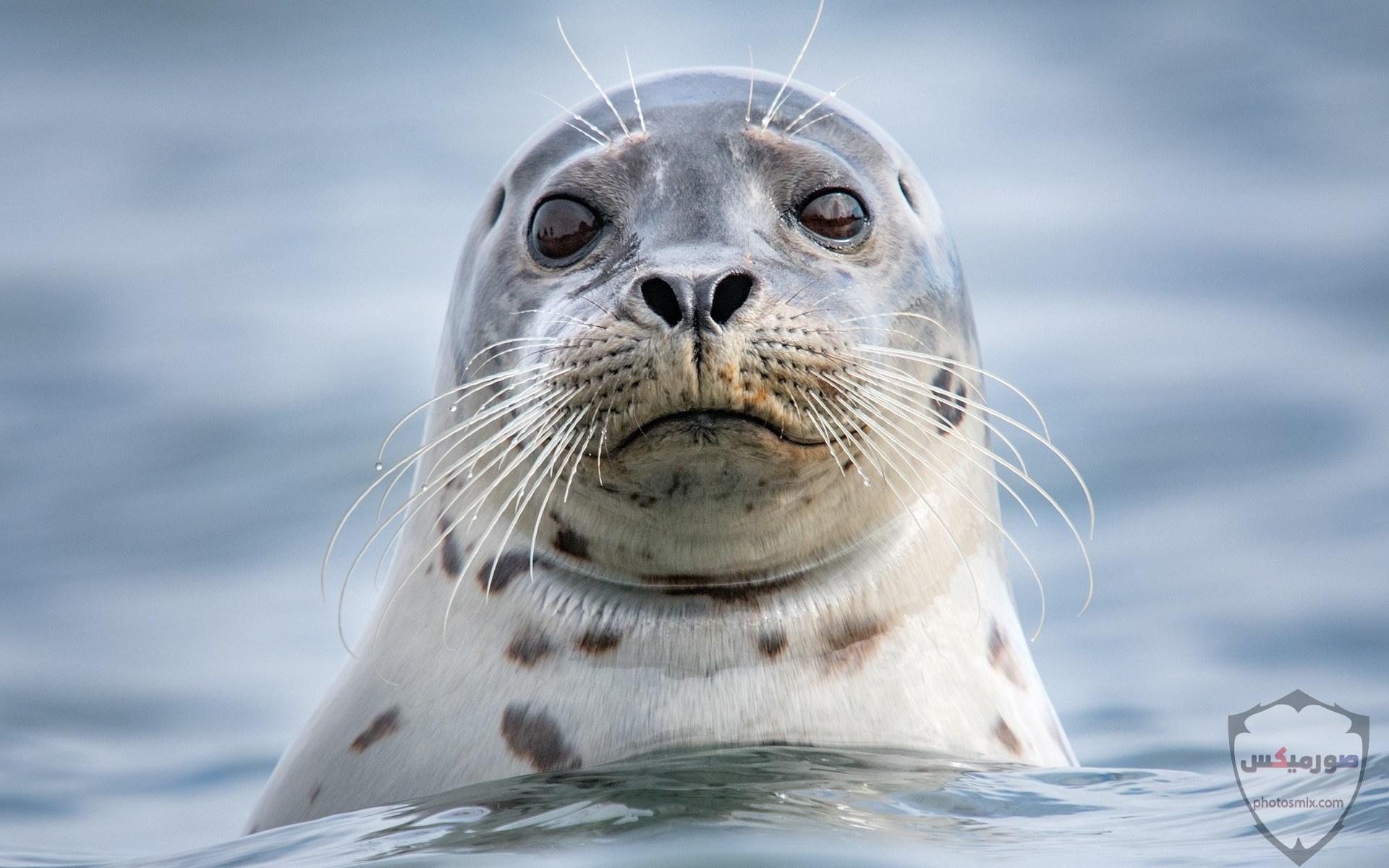 صور حيوانات مضحكة فيديوهات حيوانات مضحكة جدا 2020 5
