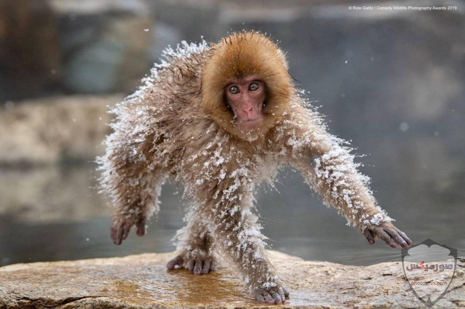 صور حيوانات مضحكة فيديوهات حيوانات مضحكة جدا 2020 6