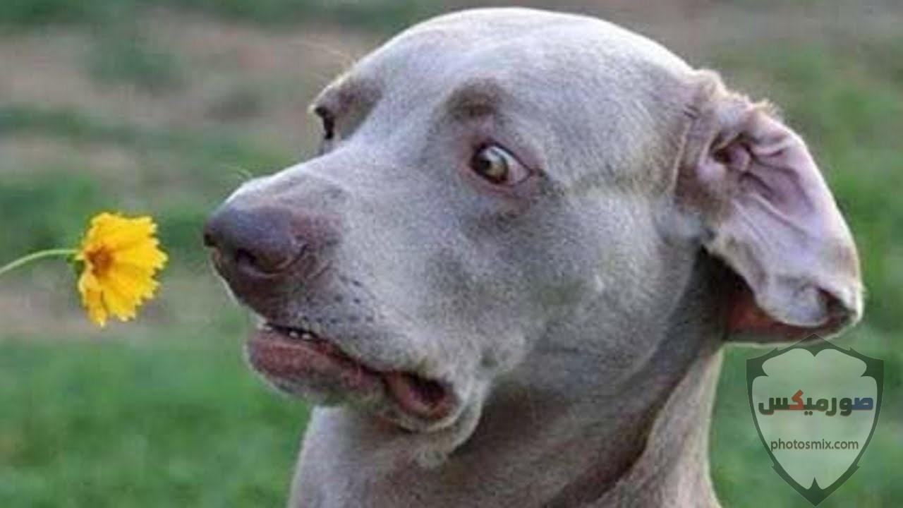 صور حيوانات مضحكة فيديوهات حيوانات مضحكة جدا 2020 9