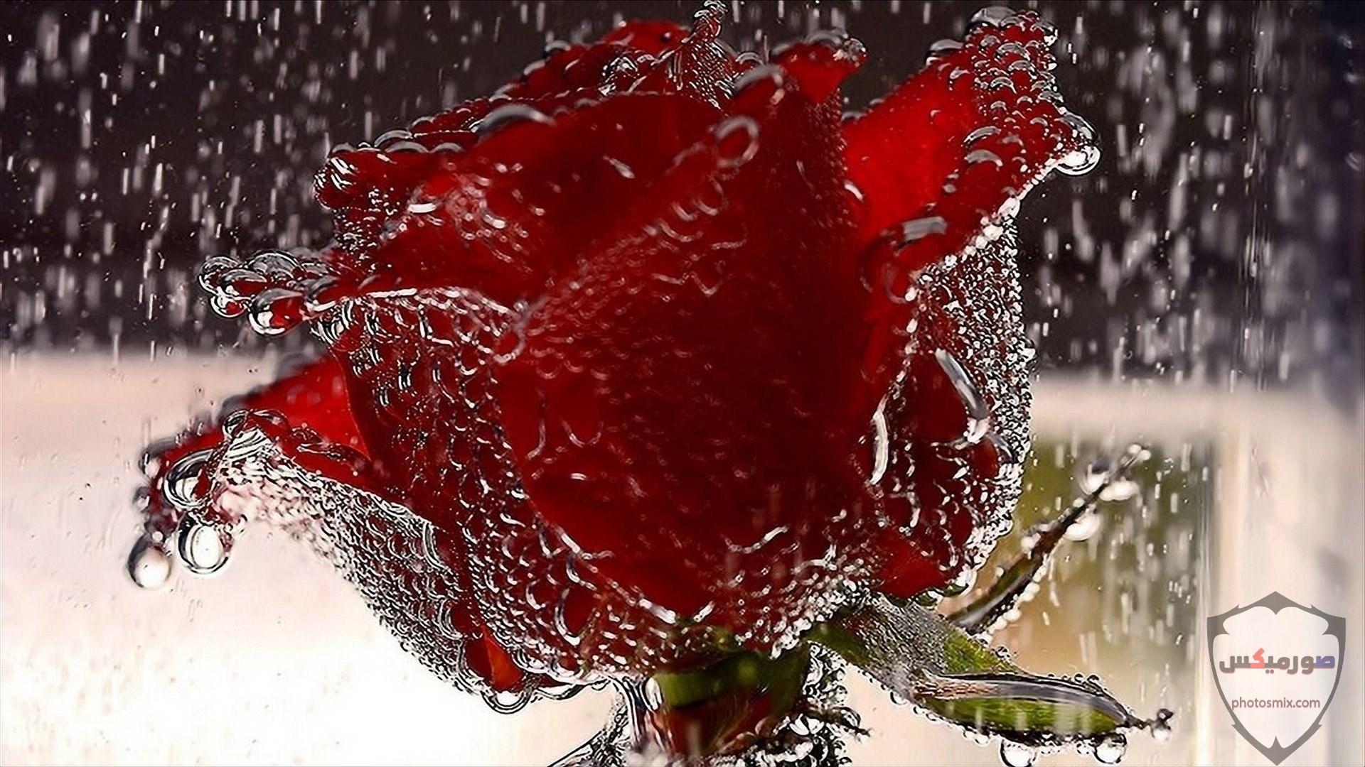 صور زهور جميلة 12