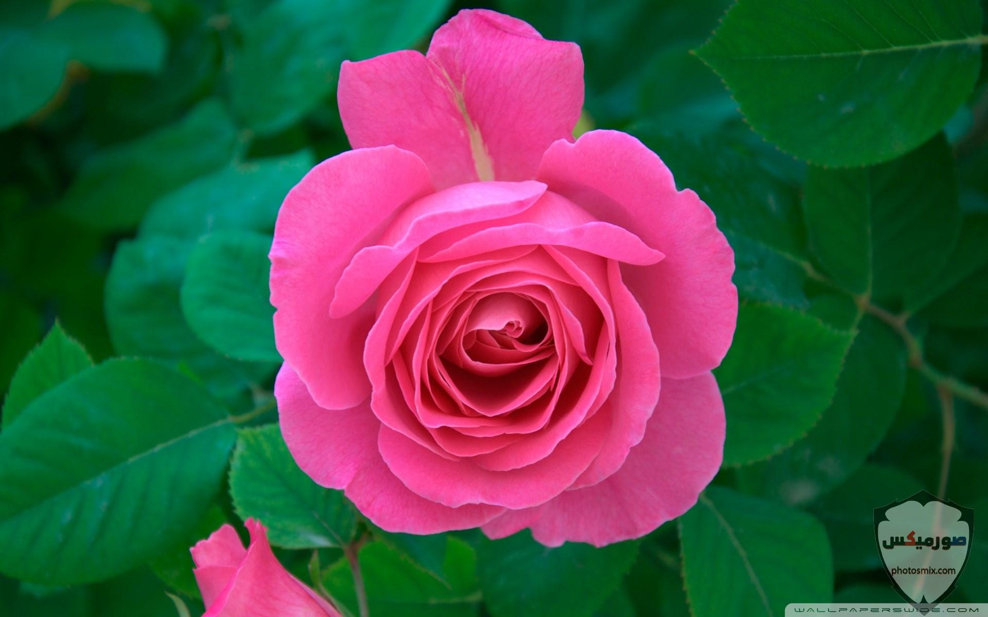 صور زهور جميلة 15