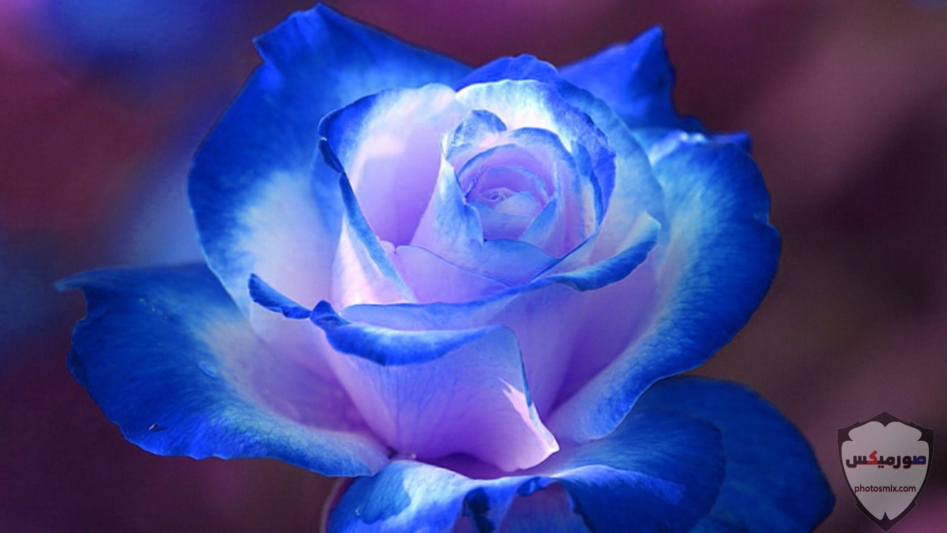 صور زهور جميلة 16