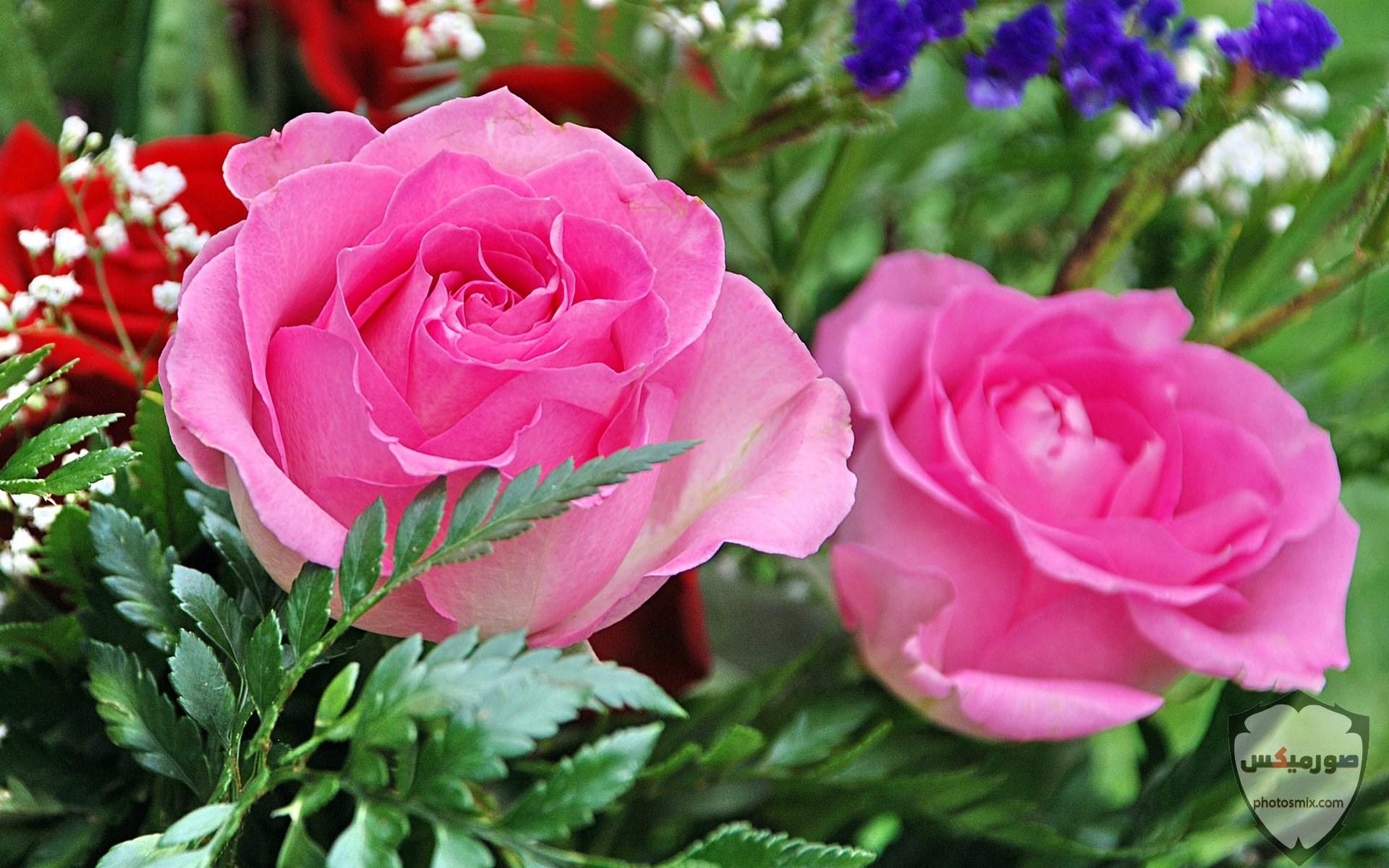 صور زهور جميلة 18