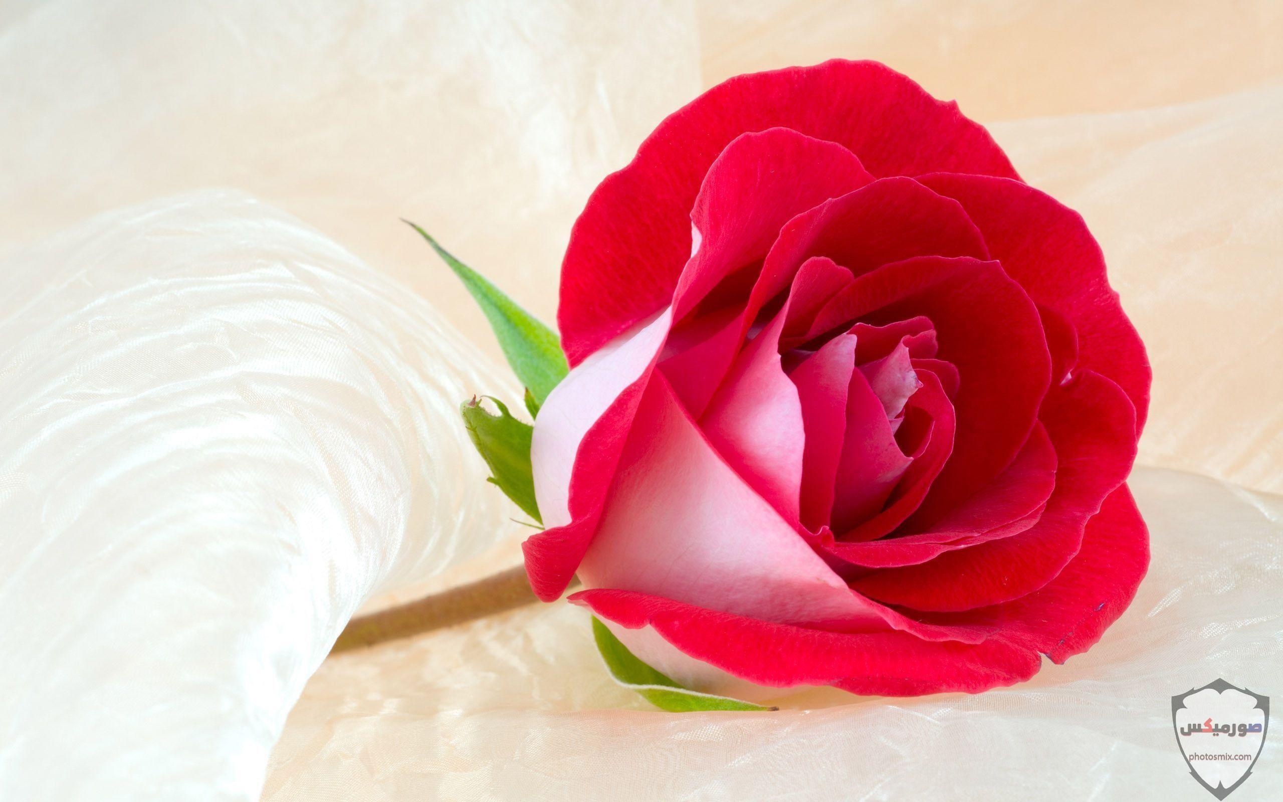 صور زهور جميلة 2