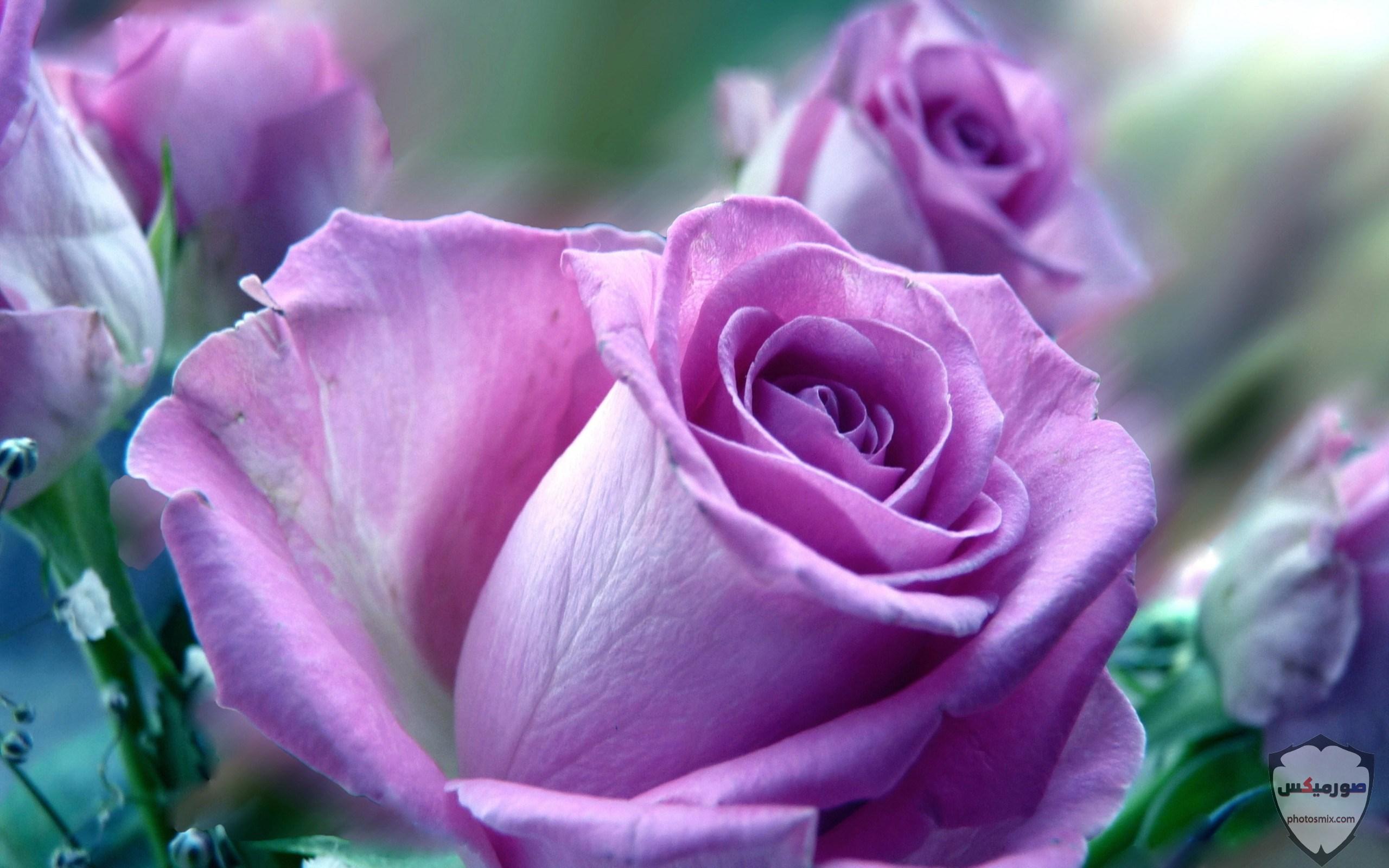 صور زهور جميلة 20