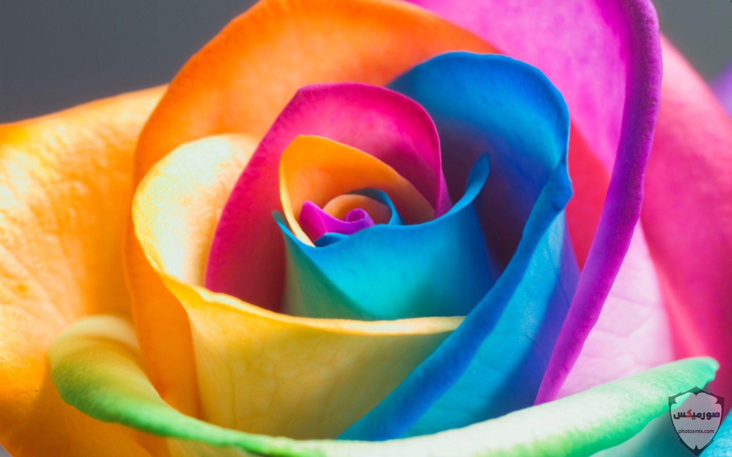 صور زهور جميلة 21 1