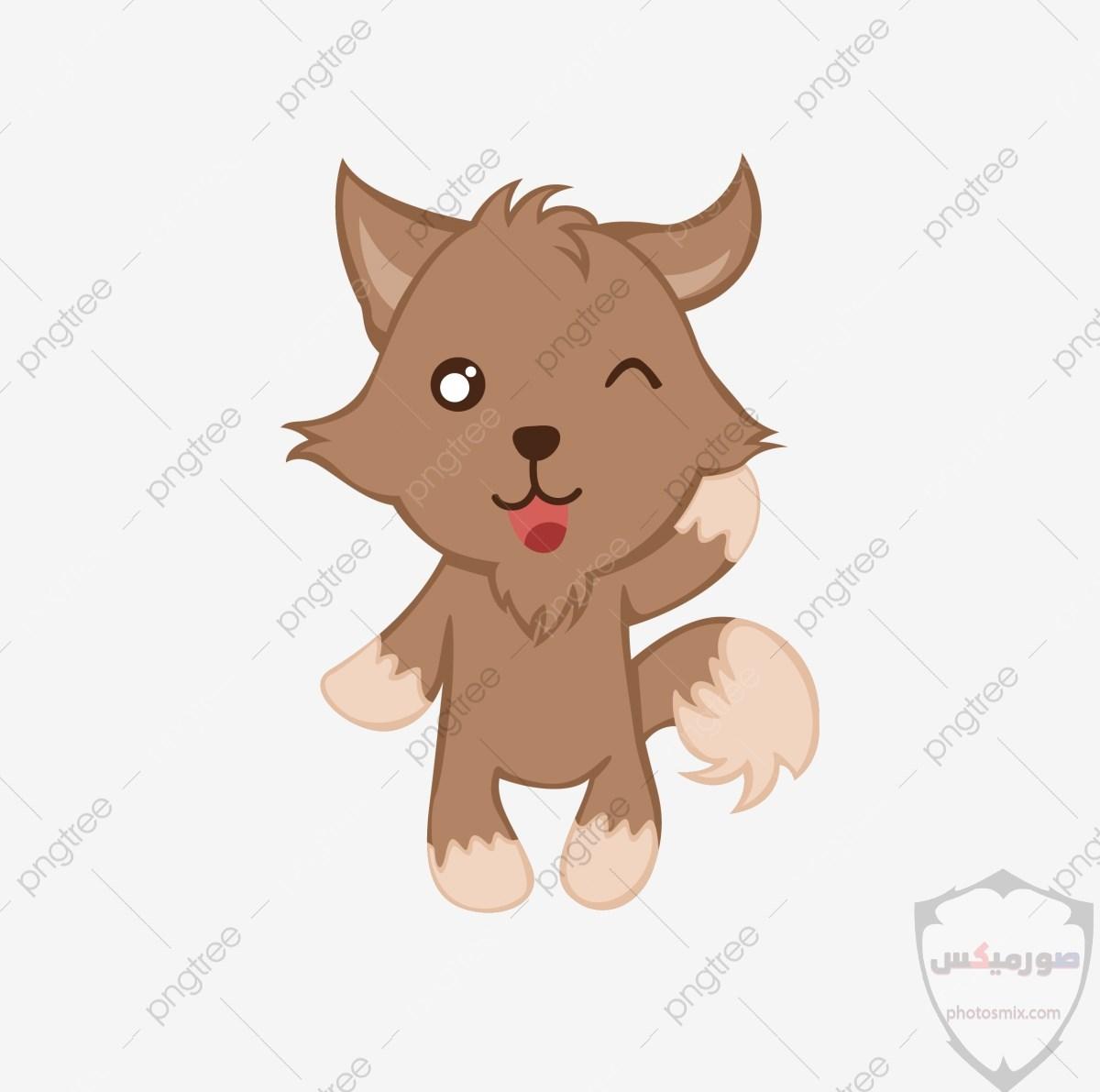 تحميل أحلى صور الذئب صور ذئب حلوة Fox photos Wild 1
