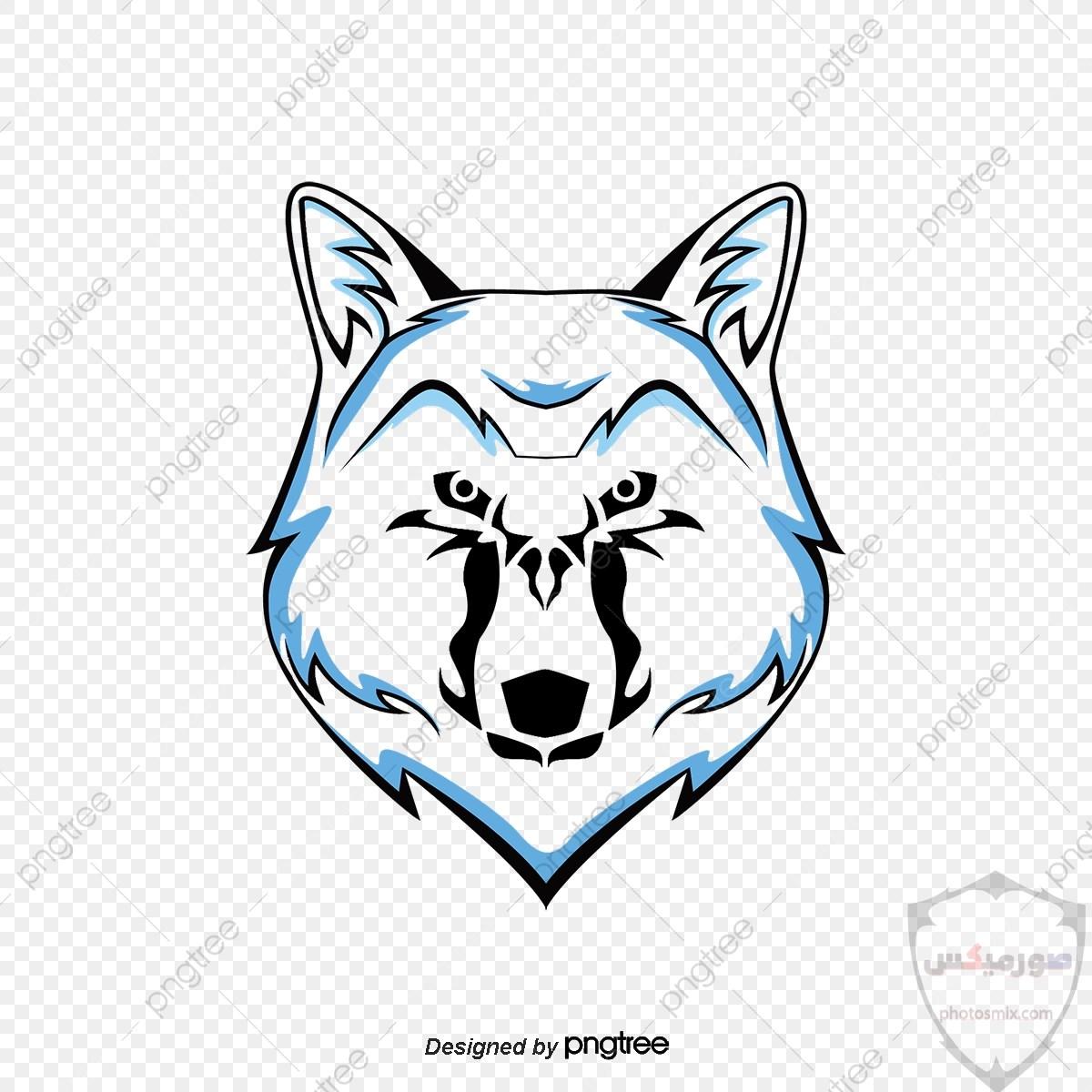 تحميل أحلى صور الذئب صور ذئب حلوة Fox photos Wild 11