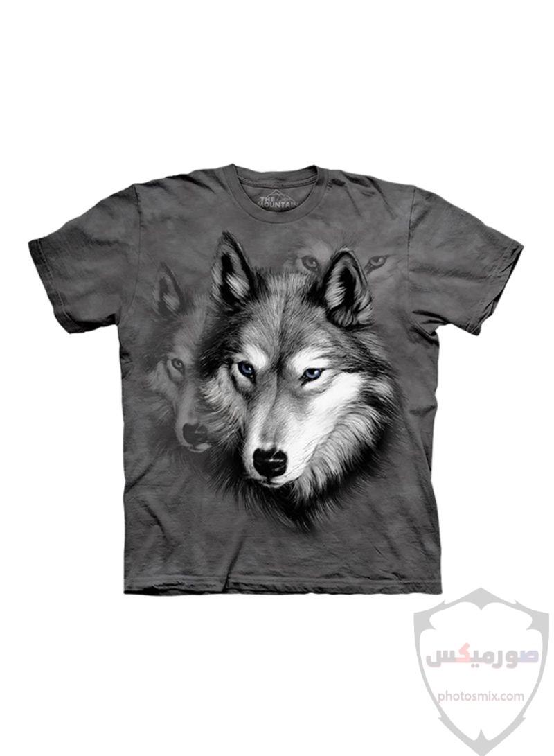 تحميل أحلى صور الذئب صور ذئب حلوة Fox photos Wild 2