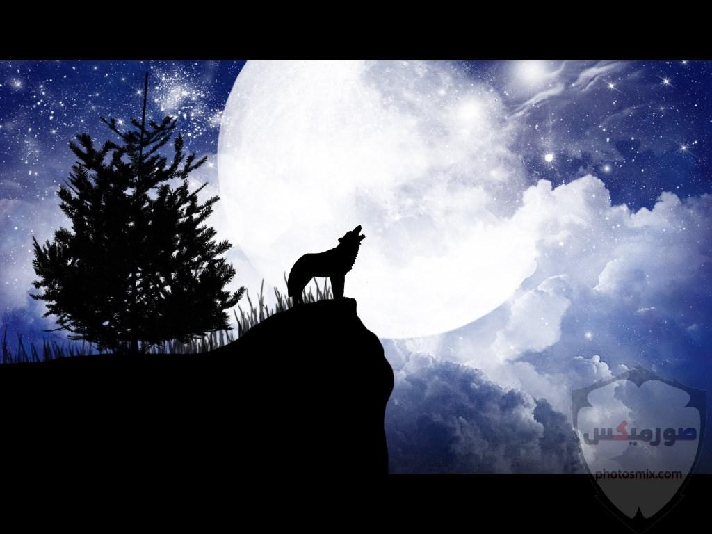 تحميل أحلى صور الذئب صور ذئب حلوة Fox photos Wild 5