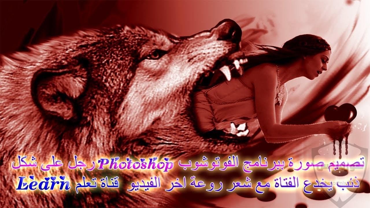 خلفيات وصور ذئاب جميلة Wolves 1