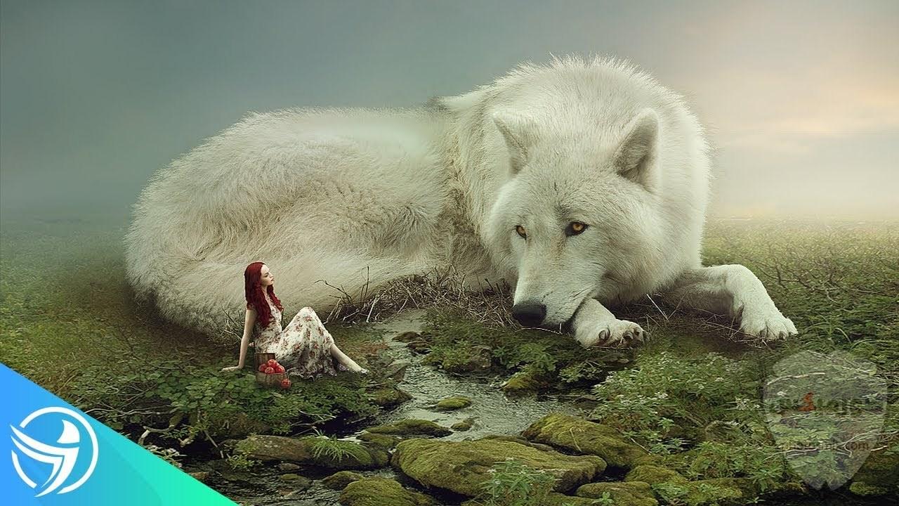 خلفيات وصور ذئاب جميلة Wolves 2