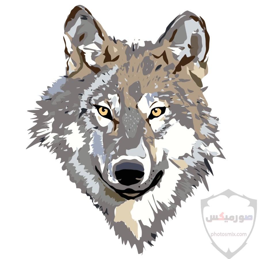 خلفيات وصور ذئاب جميلة Wolves 8