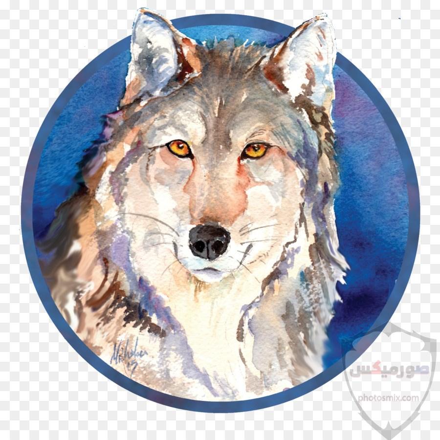 خلفيات وصور ذئاب جميلة Wolves 9