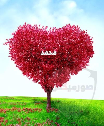 صور اسم محمد خلفيات ورمزيات Mohamed 14