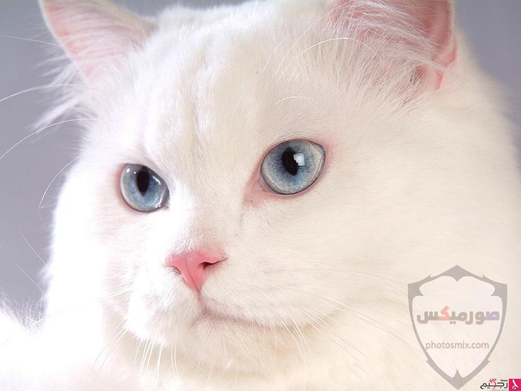 صور خلفيات رمزيات قطط كيوت صورة قطة كيوت جدا 12