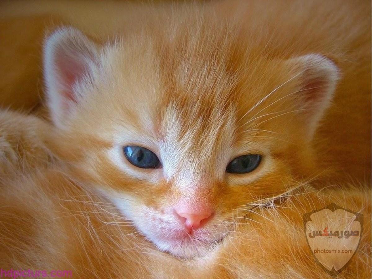 صور خلفيات رمزيات قطط كيوت صورة قطة كيوت جدا 13