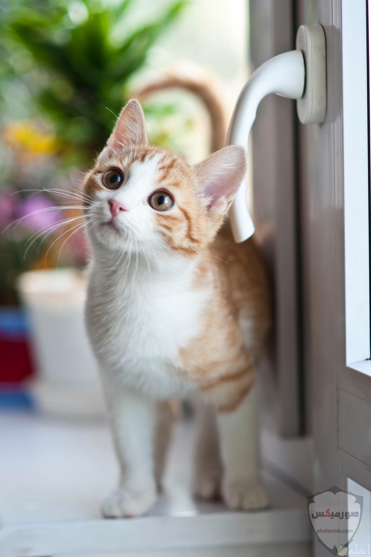 صور خلفيات رمزيات قطط كيوت صورة قطة كيوت جدا 14