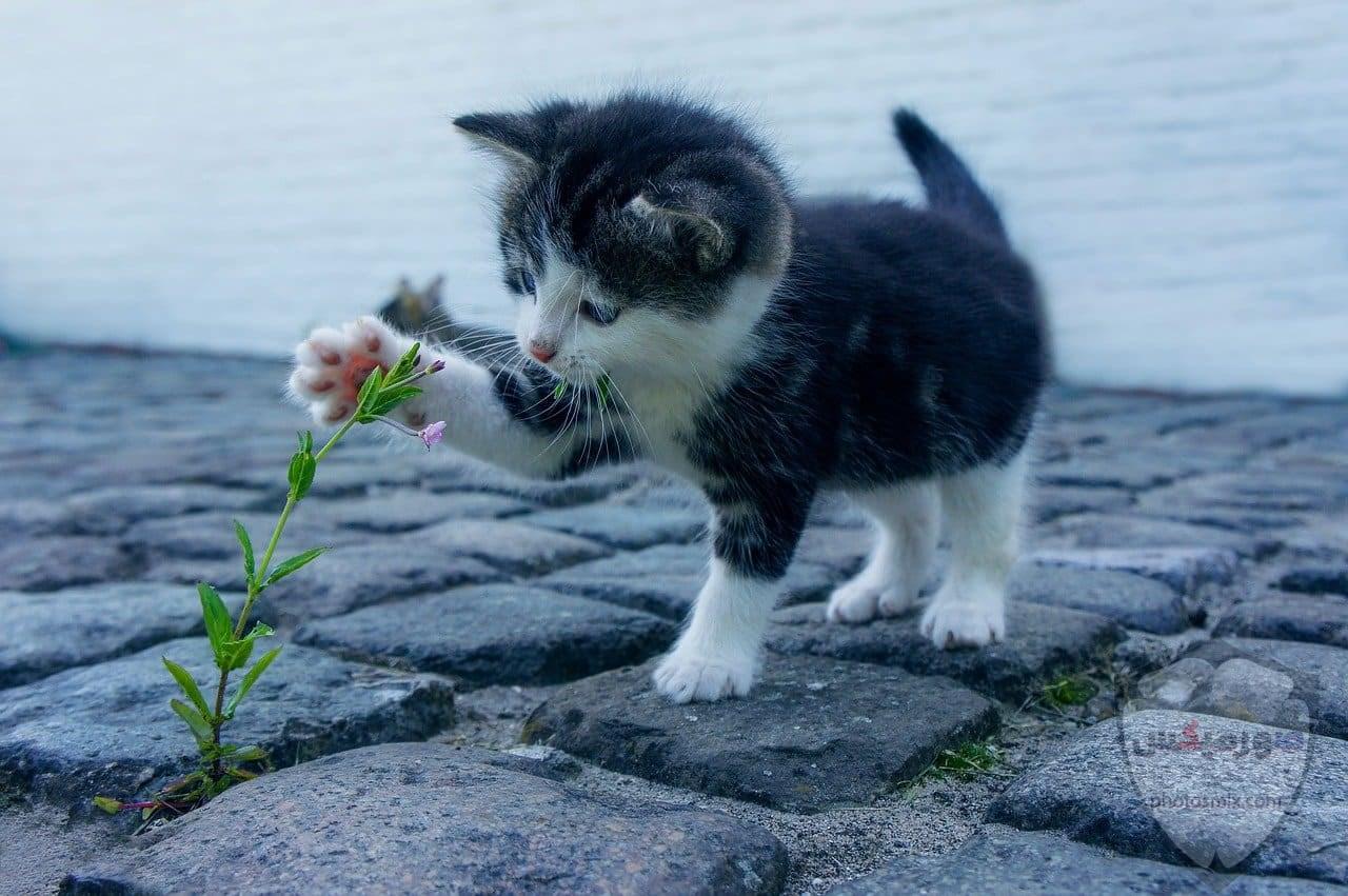 صور خلفيات رمزيات قطط كيوت صورة قطة كيوت جدا 16