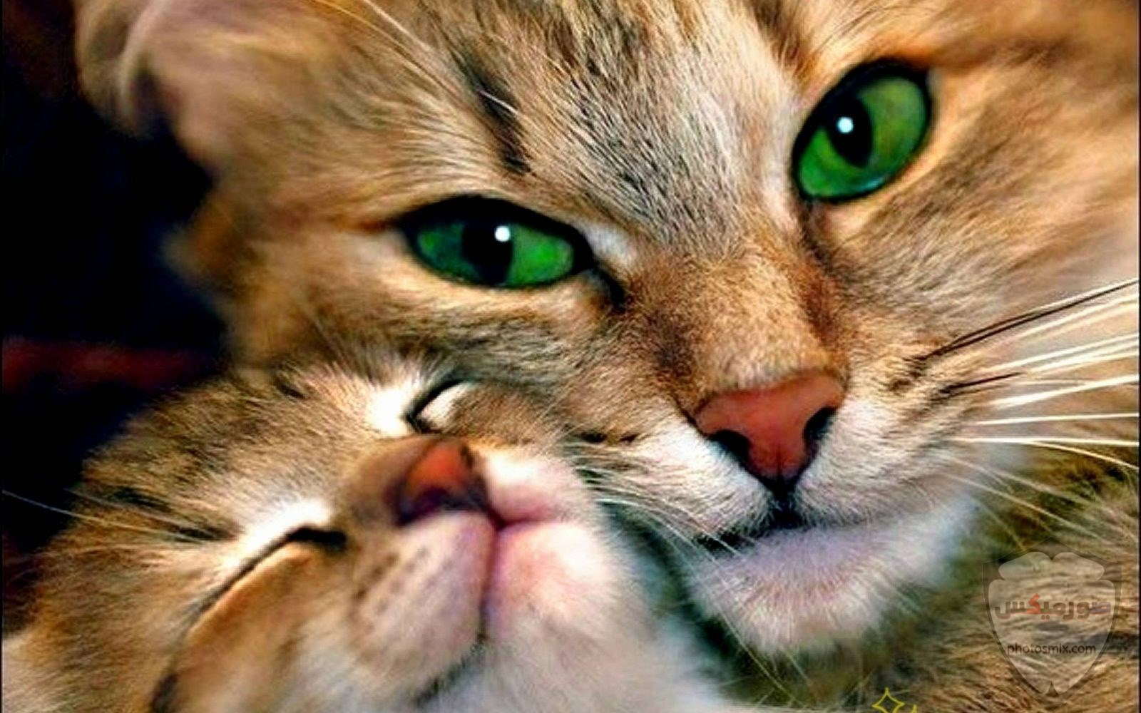 صور خلفيات رمزيات قطط كيوت صورة قطة كيوت جدا 18