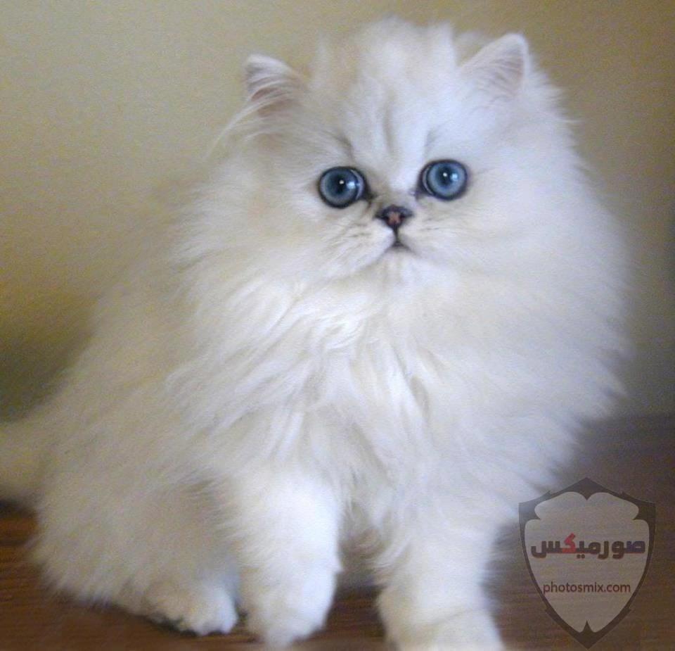 صور خلفيات رمزيات قطط كيوت صورة قطة كيوت جدا 21