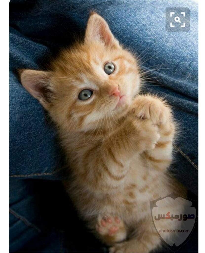 صور خلفيات رمزيات قطط كيوت صورة قطة كيوت جدا 22