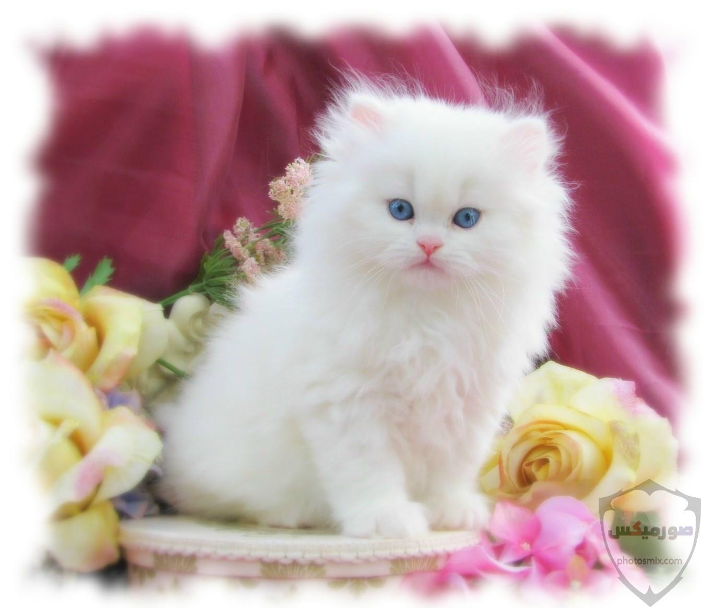 صور خلفيات رمزيات قطط كيوت صورة قطة كيوت جدا 24