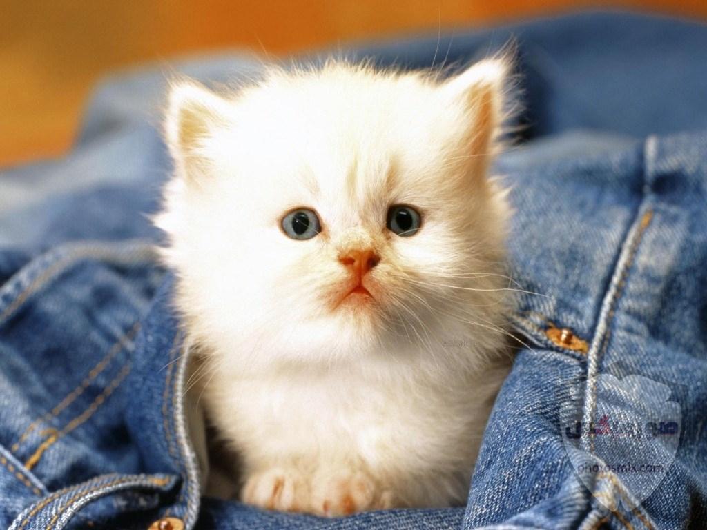 صور خلفيات رمزيات قطط كيوت صورة قطة كيوت جدا 31