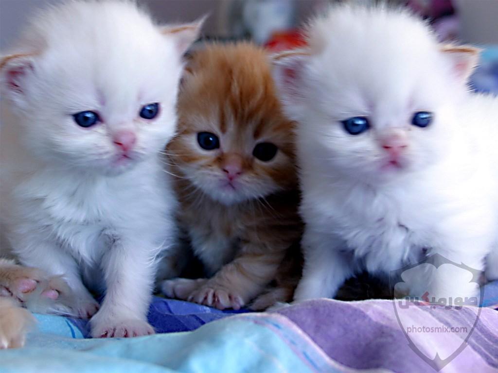 صور خلفيات رمزيات قطط كيوت صورة قطة كيوت جدا 34