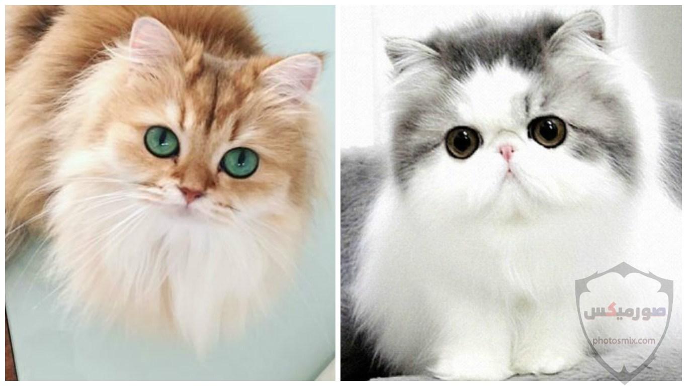 صور خلفيات رمزيات قطط كيوت صورة قطة كيوت جدا 35