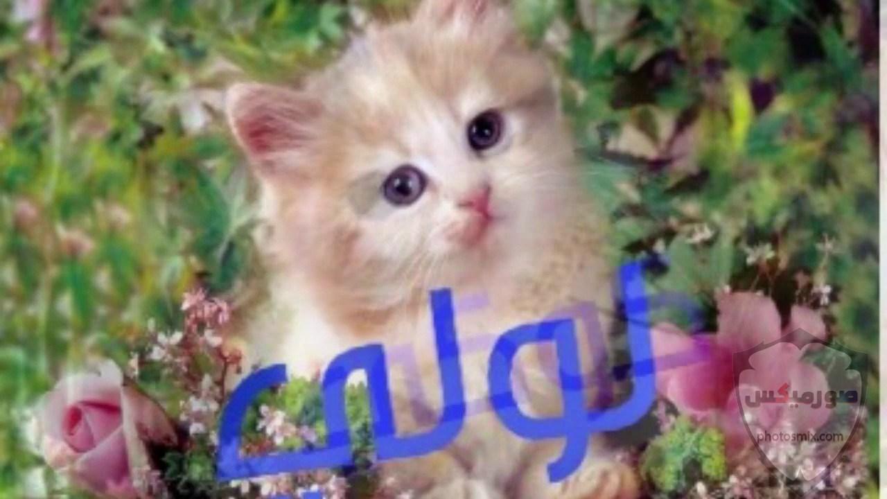 صور خلفيات رمزيات قطط كيوت صورة قطة كيوت جدا 38