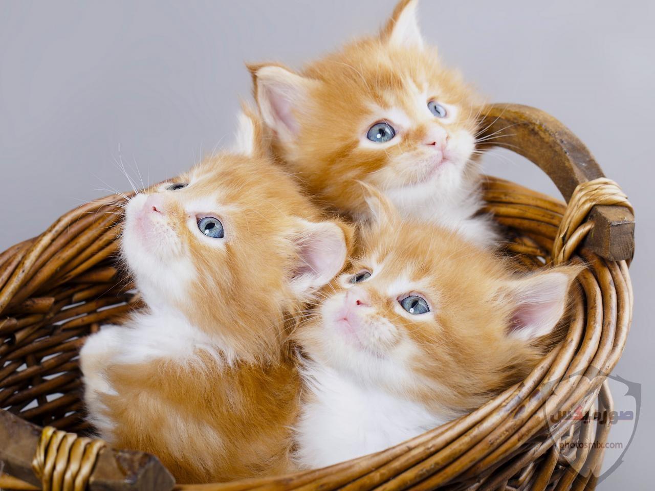 صور خلفيات رمزيات قطط كيوت صورة قطة كيوت جدا 40