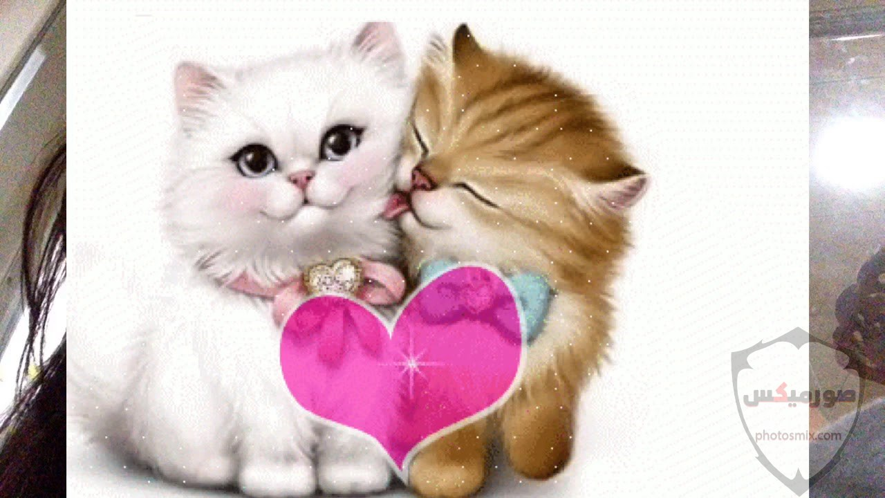 صور خلفيات رمزيات قطط كيوت صورة قطة كيوت جدا 41