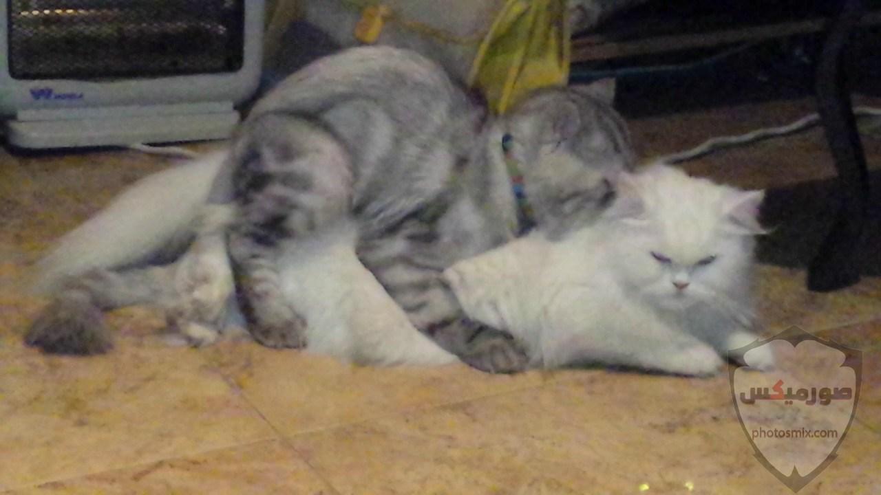 صور خلفيات رمزيات قطط كيوت صورة قطة كيوت جدا 46