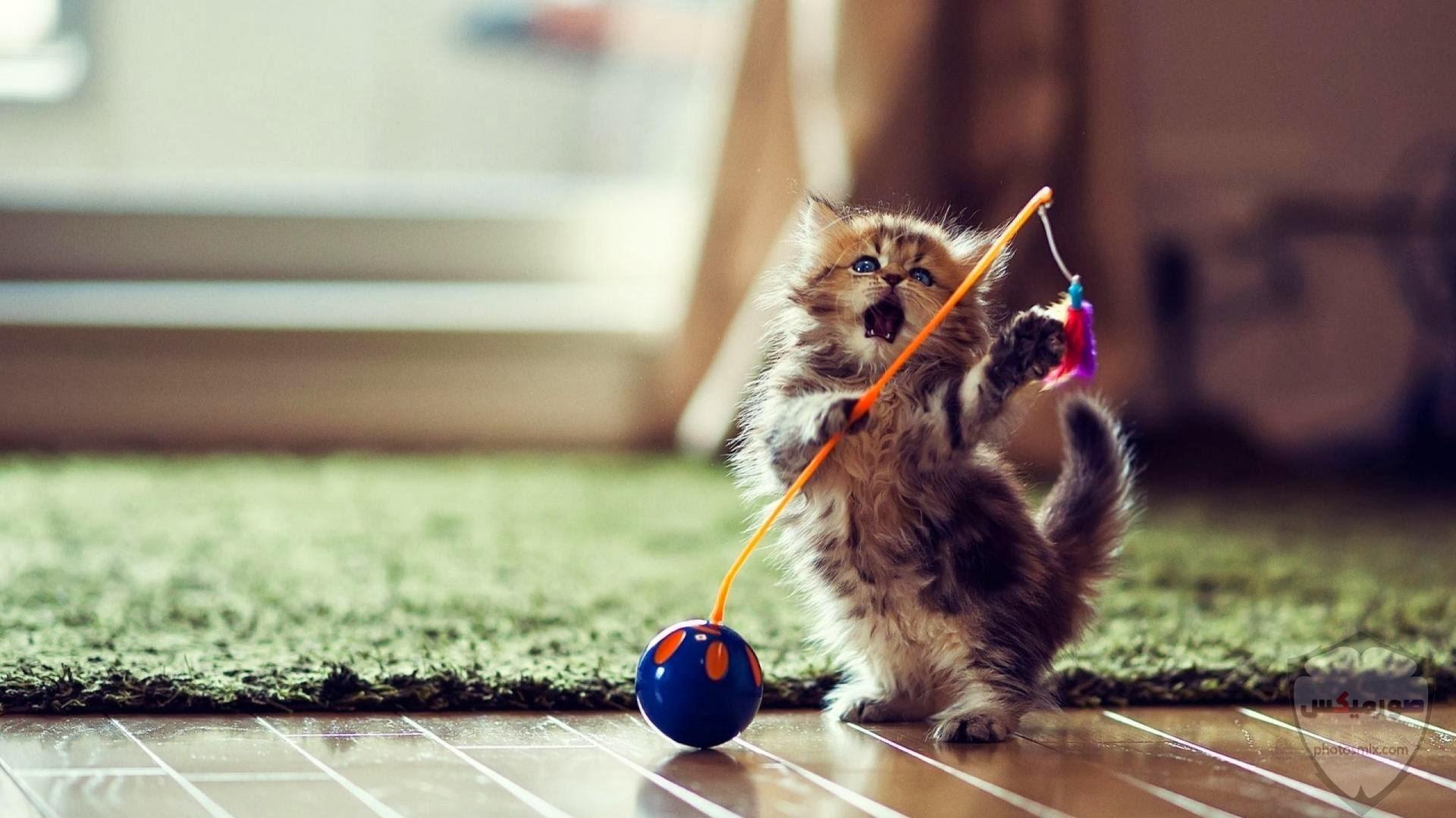 صور خلفيات رمزيات قطط كيوت صورة قطة كيوت جدا 48