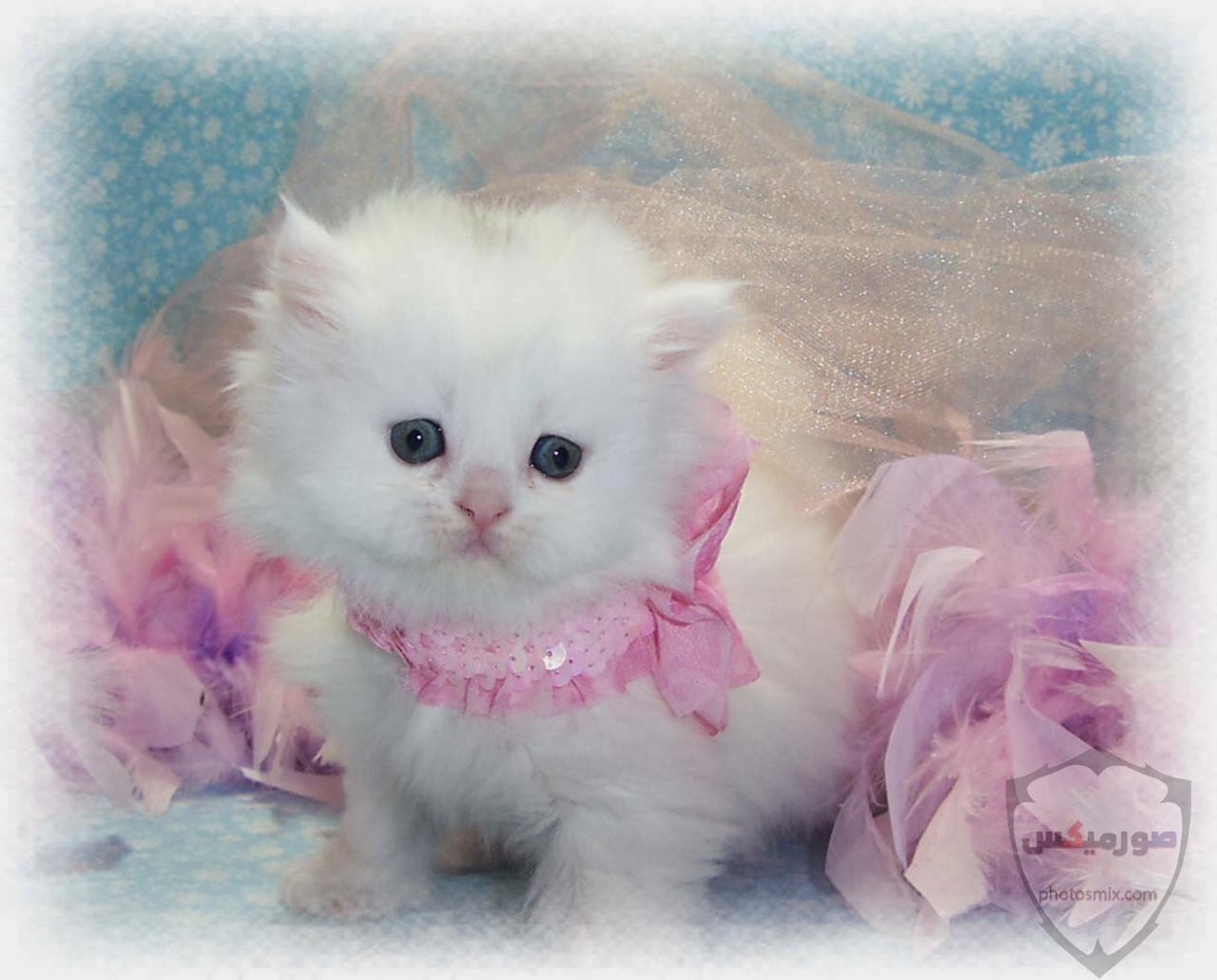 صور خلفيات رمزيات قطط كيوت صورة قطة كيوت جدا 51