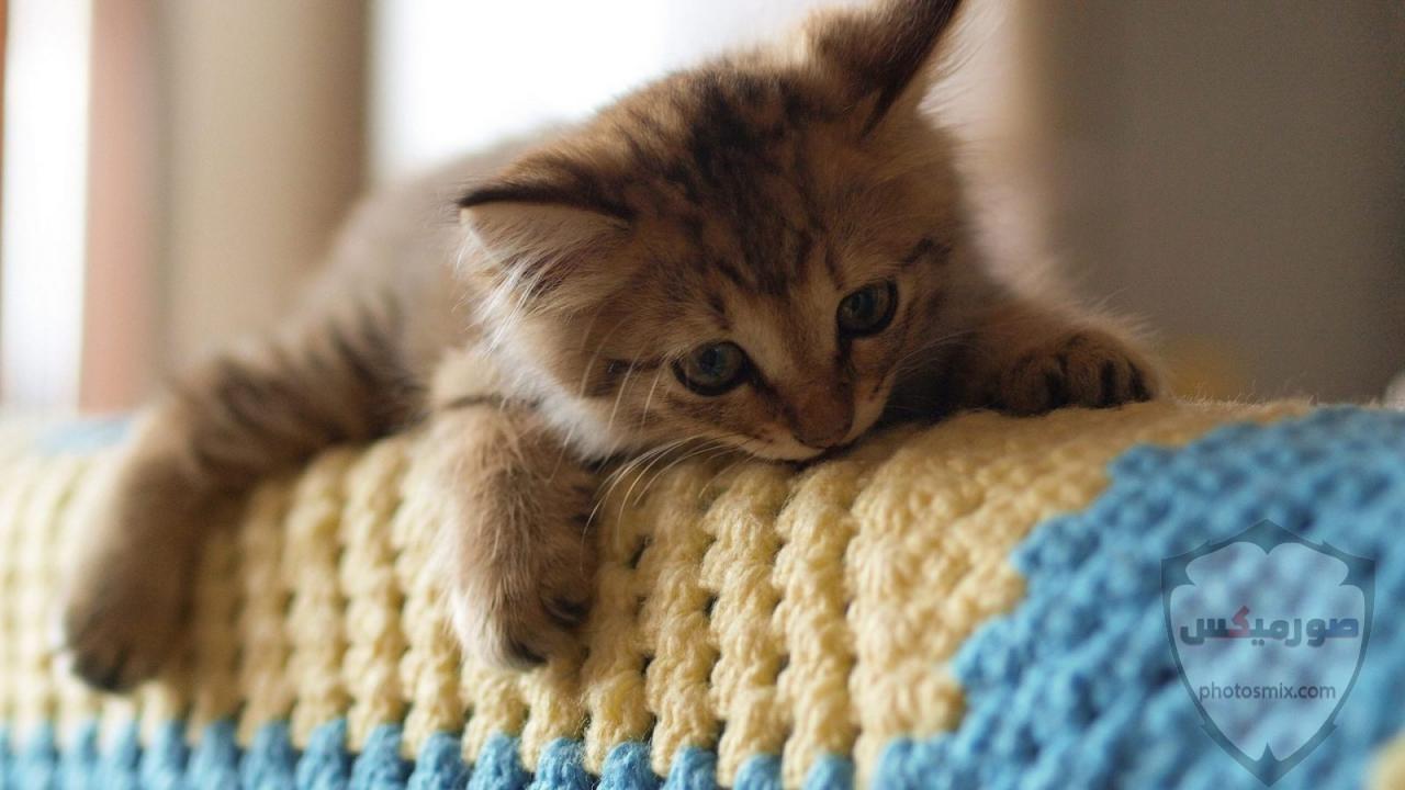 صور خلفيات رمزيات قطط كيوت صورة قطة كيوت جدا 53