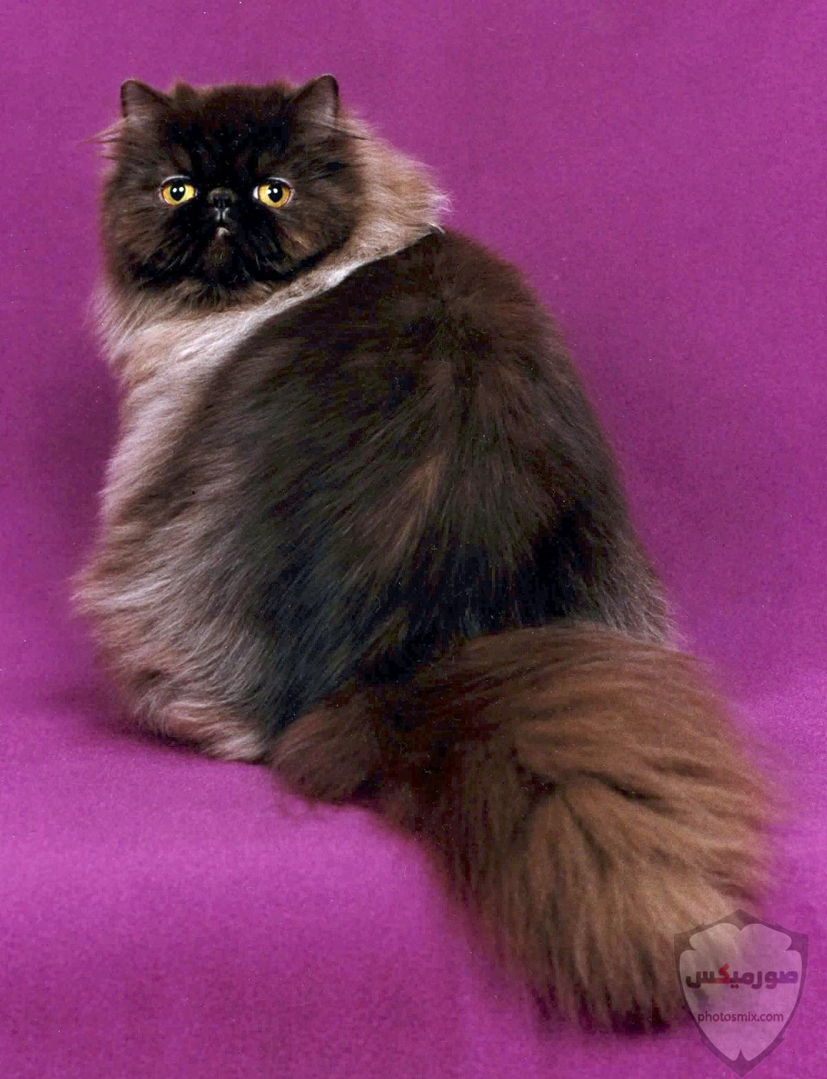 صور خلفيات رمزيات قطط كيوت صورة قطة كيوت جدا 54
