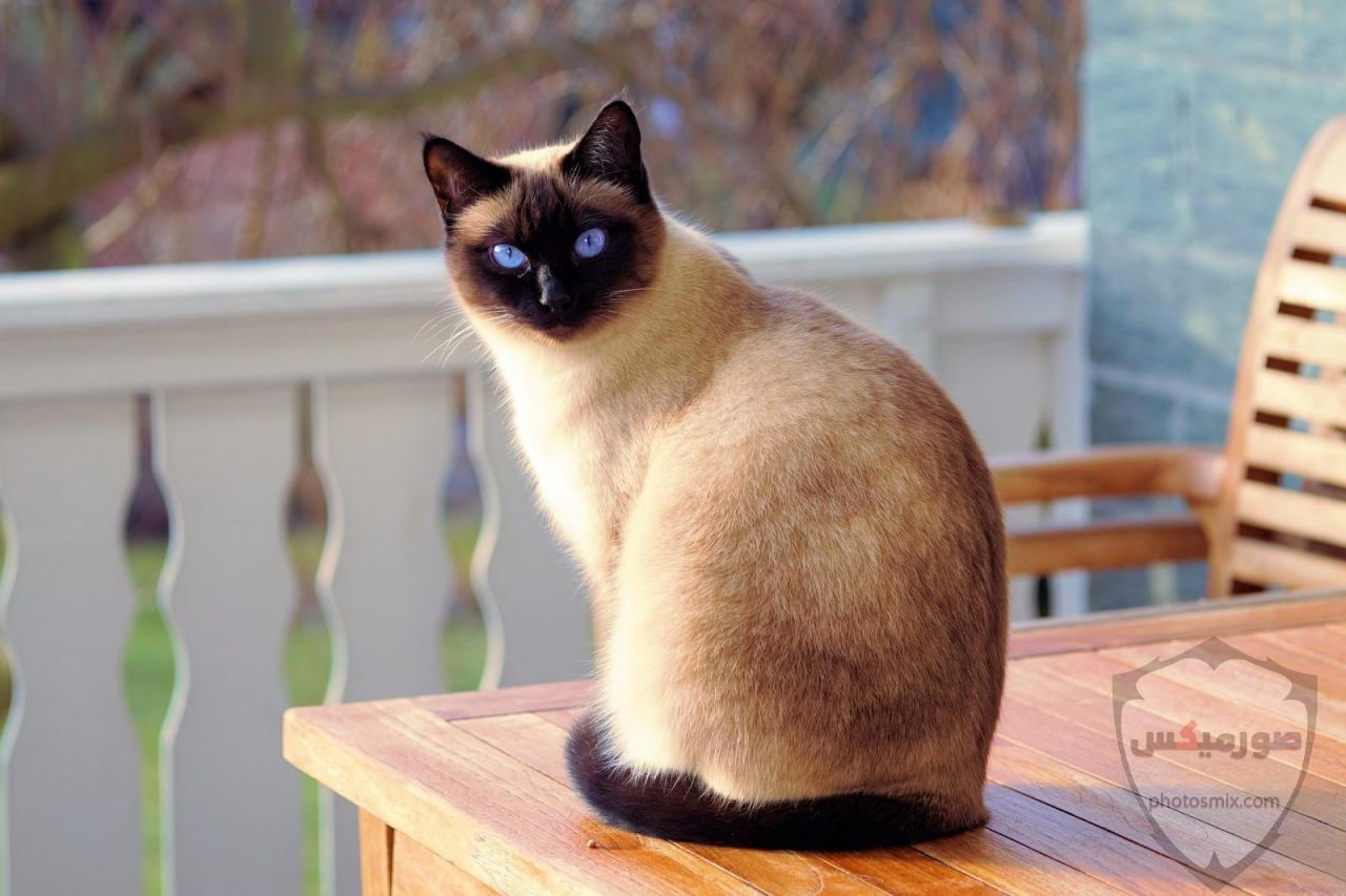صور خلفيات رمزيات قطط كيوت صورة قطة كيوت جدا 56