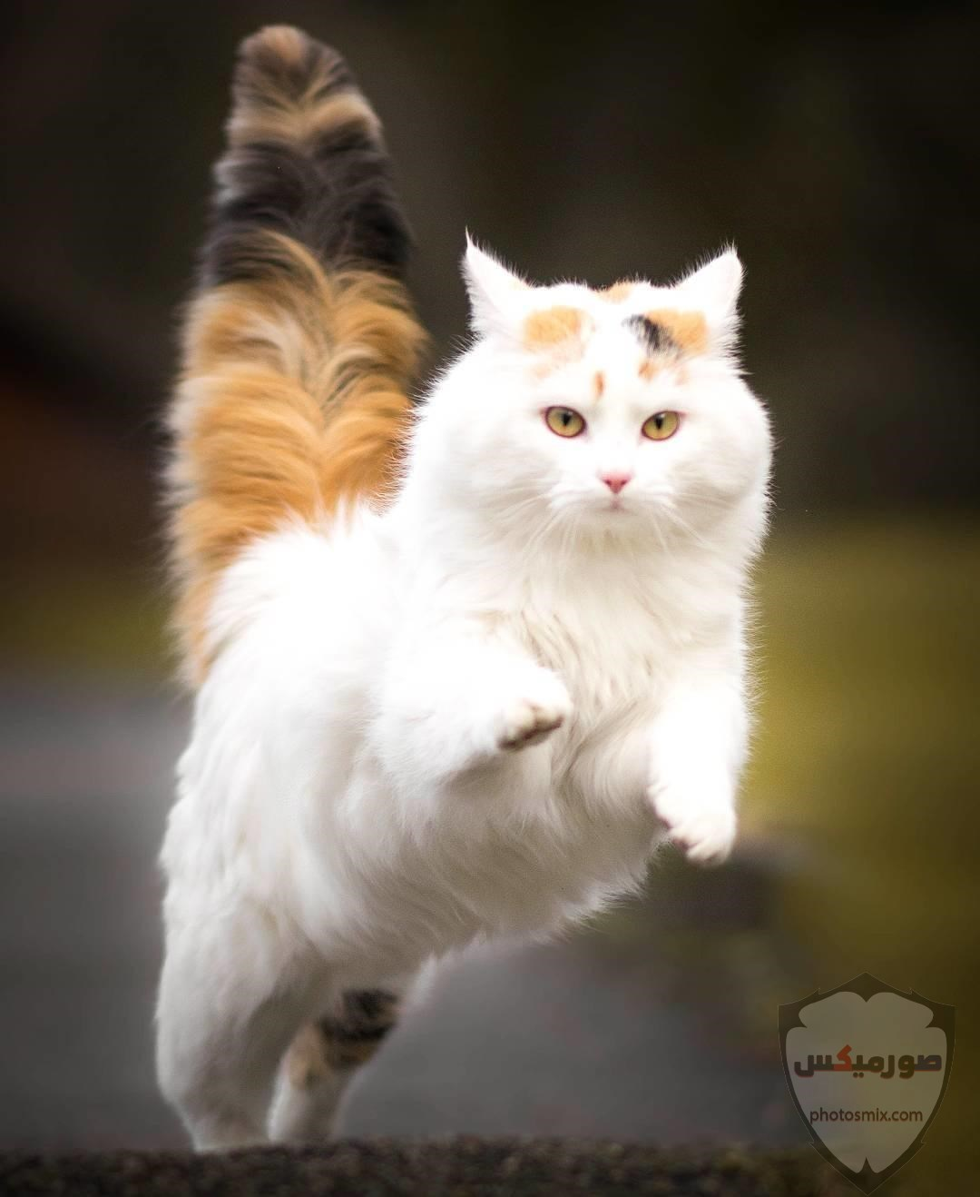 صور خلفيات رمزيات قطط كيوت صورة قطة كيوت جدا 58
