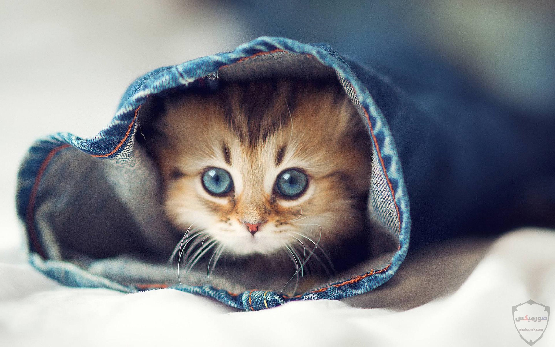 صور خلفيات رمزيات قطط كيوت صورة قطة كيوت جدا 6