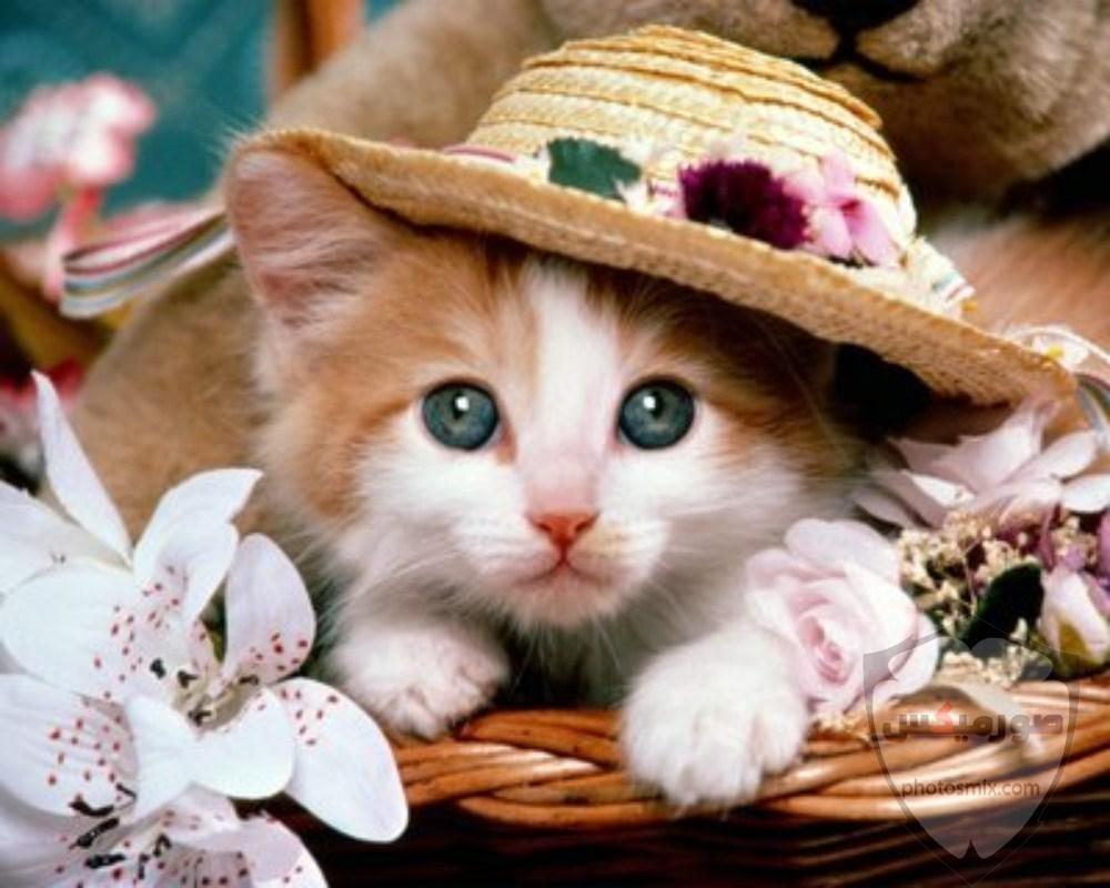 صور خلفيات رمزيات قطط كيوت صورة قطة كيوت جدا 61