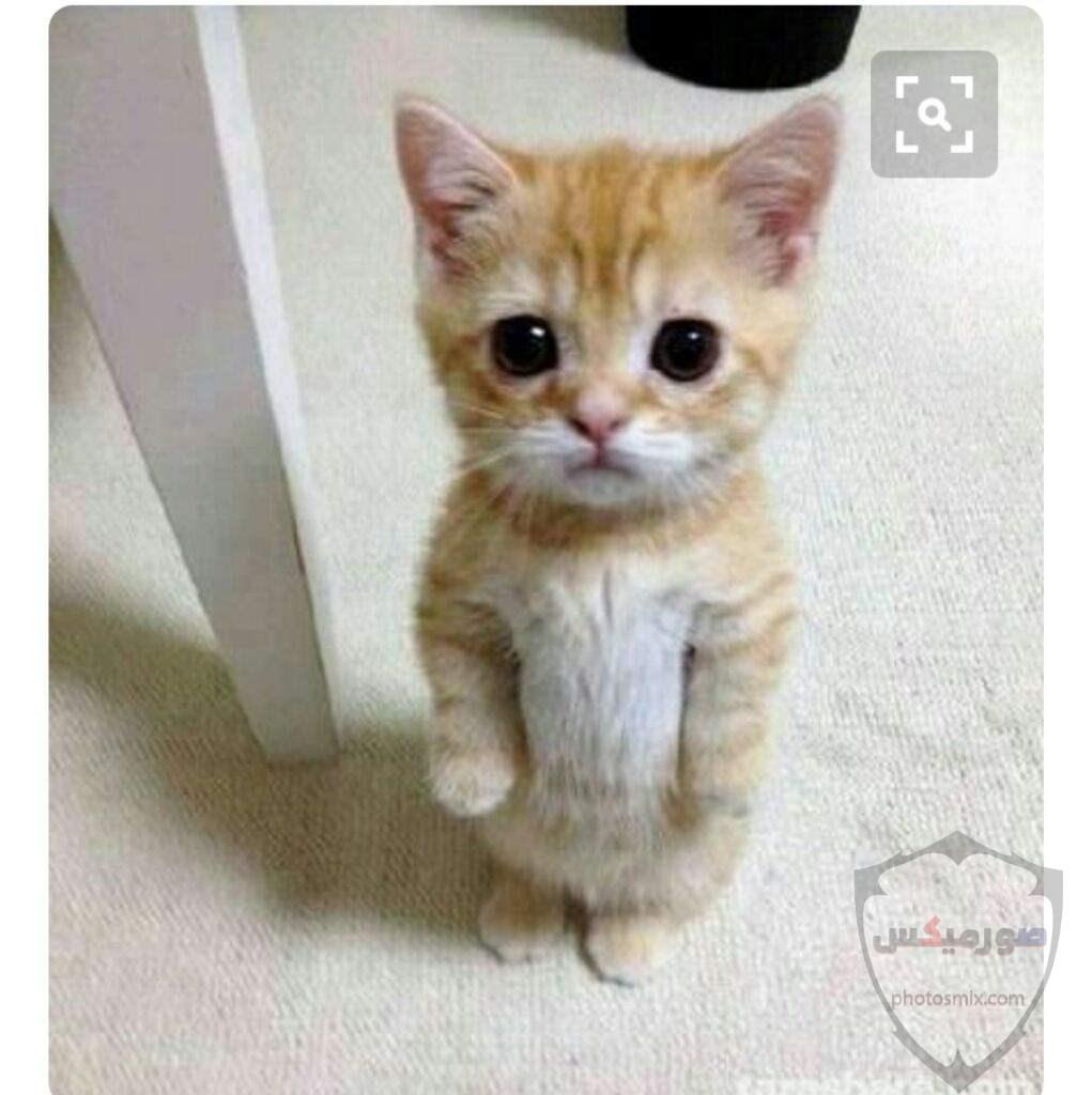 صور خلفيات رمزيات قطط كيوت صورة قطة كيوت جدا 64