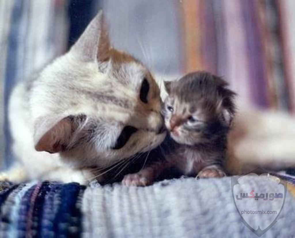 صور خلفيات رمزيات قطط كيوت صورة قطة كيوت جدا 74
