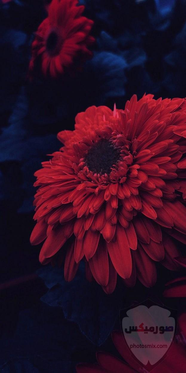 صور خلفيات كمبيوتر 2020 روعة بجودة عالية HD صور خلفيات موبايل رومانسية جميلة 2021 43