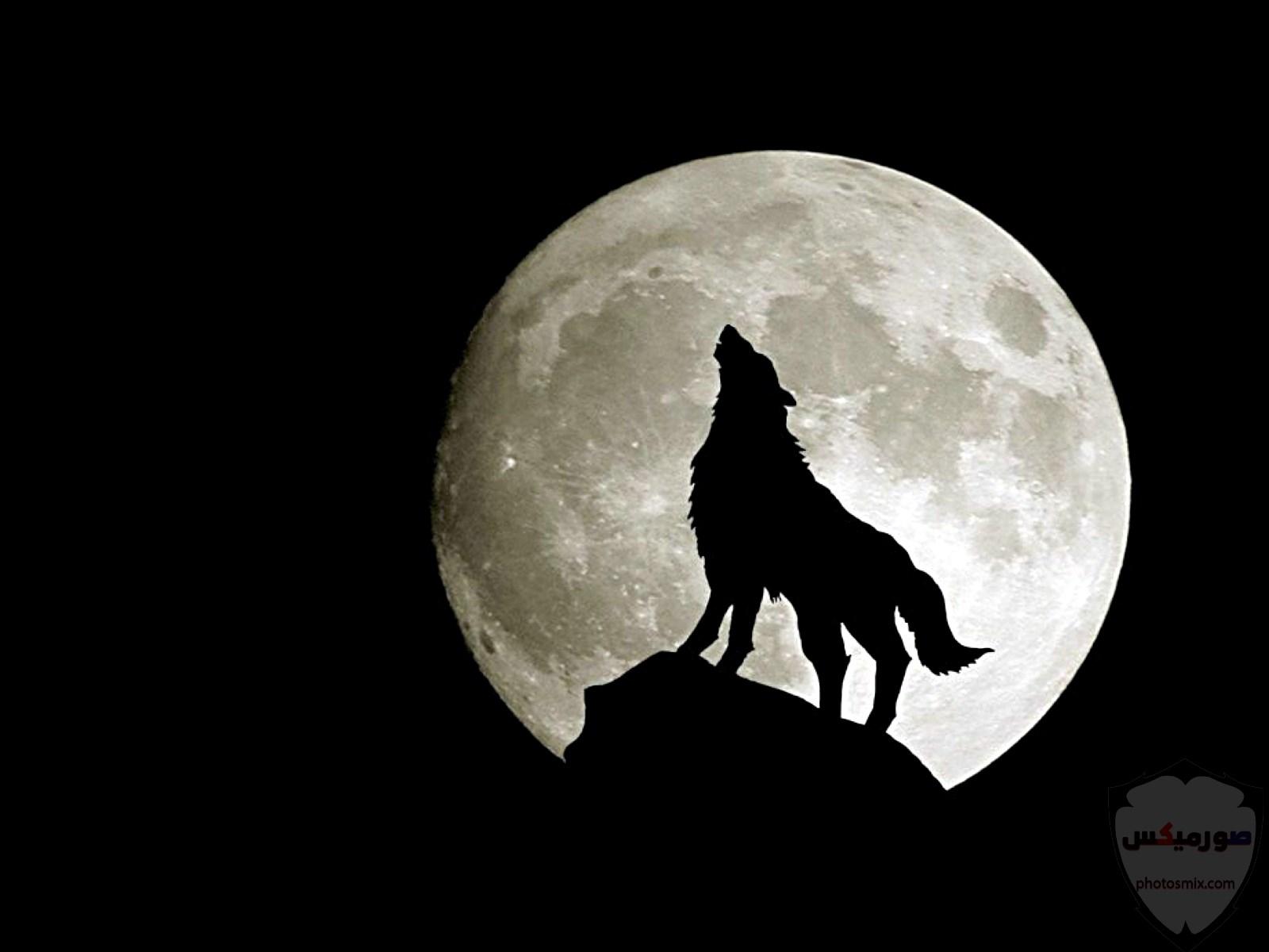 صور ذئاب صور ذئب مكتوب عليها كلام خلفيات ذئاب مرعبة خلفيات ذئاب جميلة صور خلفيات ذئاب خلفيات صور ذئاب حلوة صور ذئاب للواتس اب 9